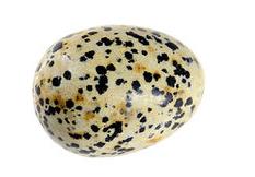 pierre lithothérapie jaspe dalmatien