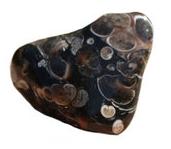 pierre lithothérapie agate turitelle agate fossile